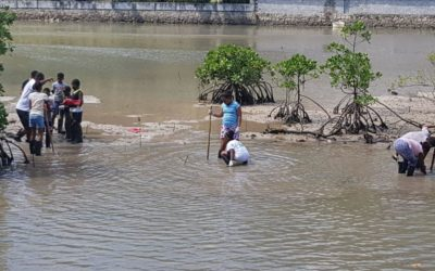 Community-based ecological wetland rehabilitation, Pasquiere, Praslin