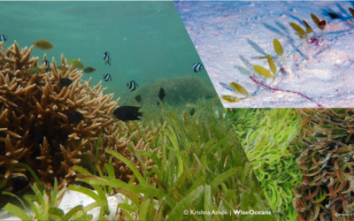 The voice of seagrass meadows