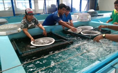 """Research and Development of Hatchery Culture of the Tropical Echinoderm HOLOTHURIA SCABRA and HOLOTHURIA sp. """"PENTARD"""" in the Republic of Seychelles for the consequent application in Sustainable Commercial Production"""