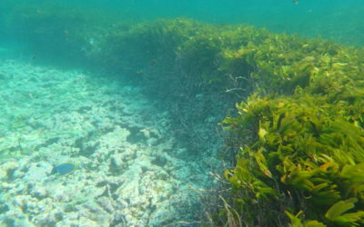 A promising future for Seychelles' Seagrass